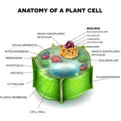 How Do You A Stem And Leaf Diagram 1996 Ford Bronco Radio Wiring Parts Of Flower Plant Know Them All 7