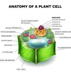 illustration of a plant cell [ 1200 x 1200 Pixel ]