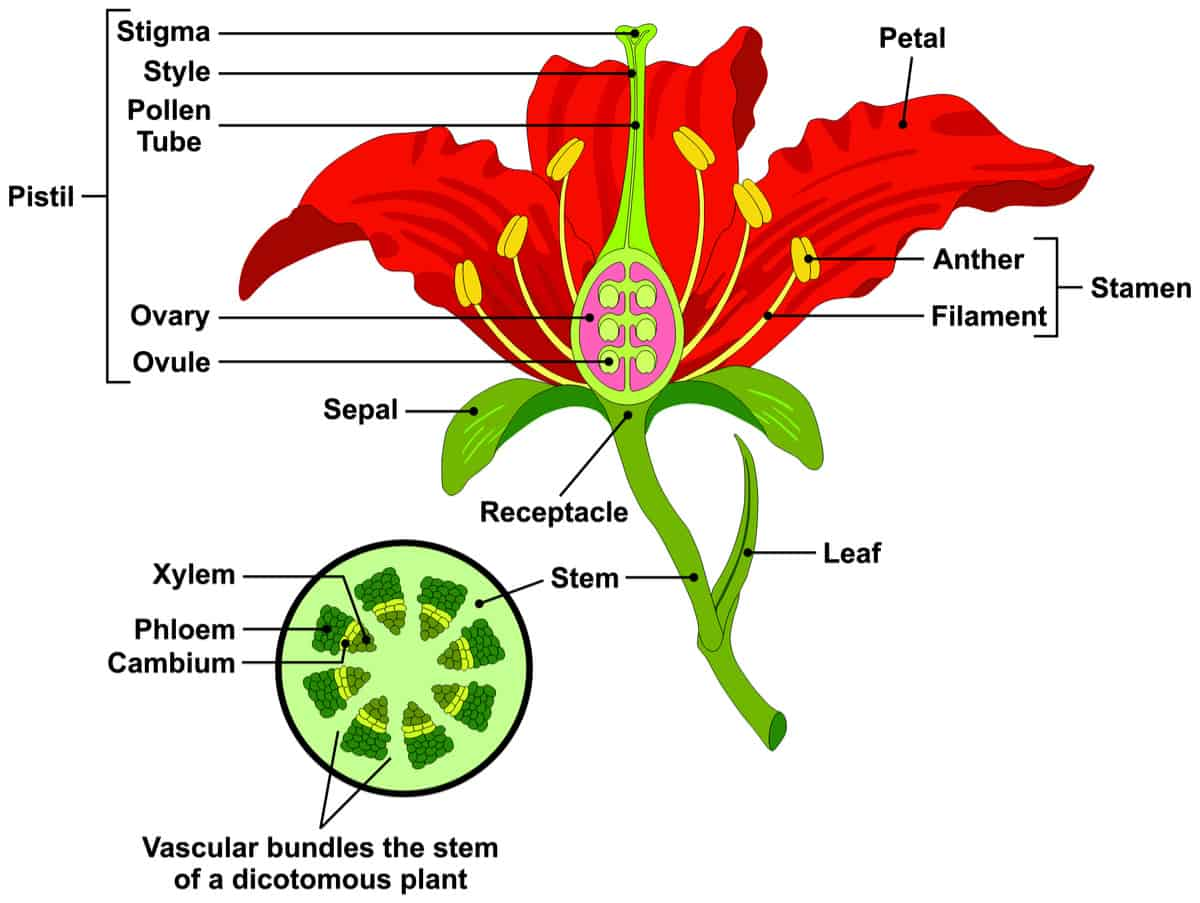 hight resolution of a parts of a flower