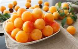 Fresh Mirabelle plums