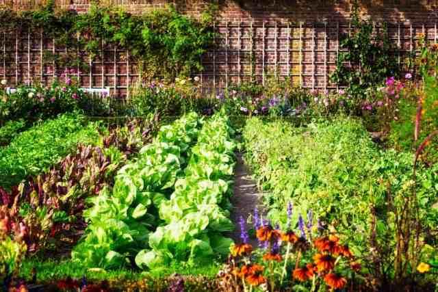 Çiçeklerle bezenmiş bir sebze ve bitki bahçesi.