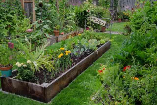 Bahçede otlar ve sebzelerle dolu bir saksı.