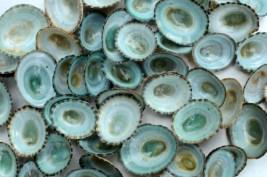 Textura Conchas