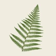 Quadro Fern Leaf