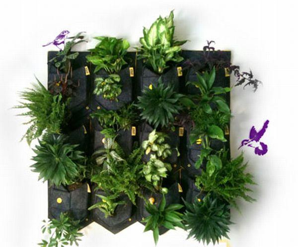 Cara De Planta