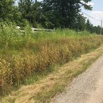 Friends of Lanark County's response to Lanark County's 2018 Spray Program