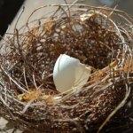 Empty nester – Don't kid yourself it's fabulous