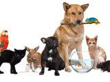 We Love Pets Hometown Press