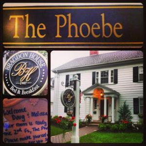 the phoebe