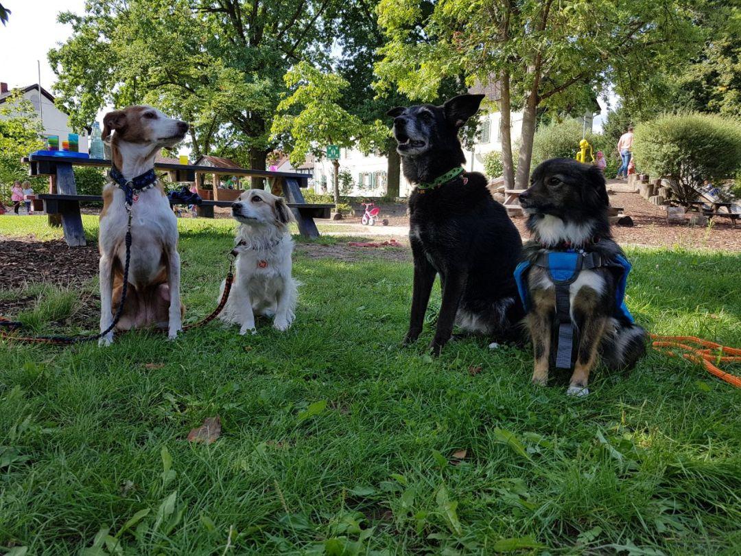 Hunde bei der Ausbildung