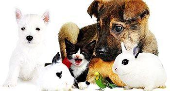 Tipos de mascotas según personalidad