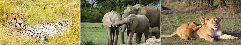 Safaris Express en Kenia