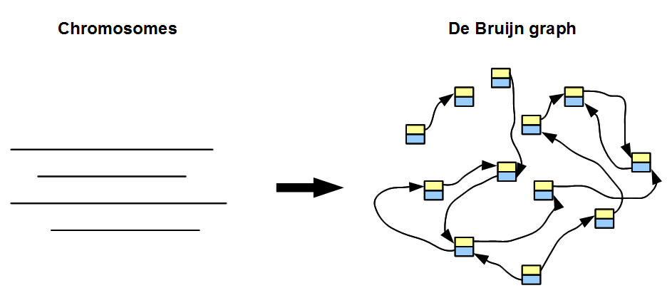 A Drawback of de Bruijn Graph Approach « Homolog.us