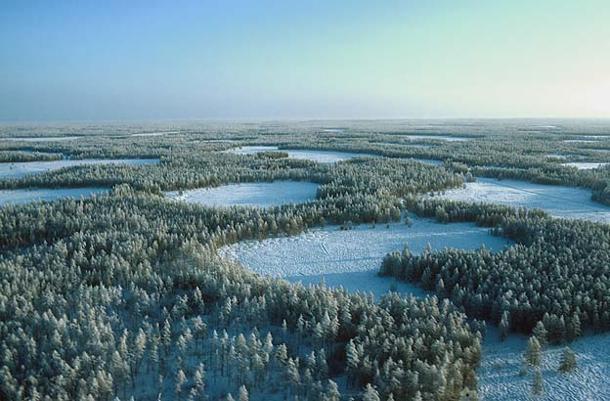 Taiga-Siberia