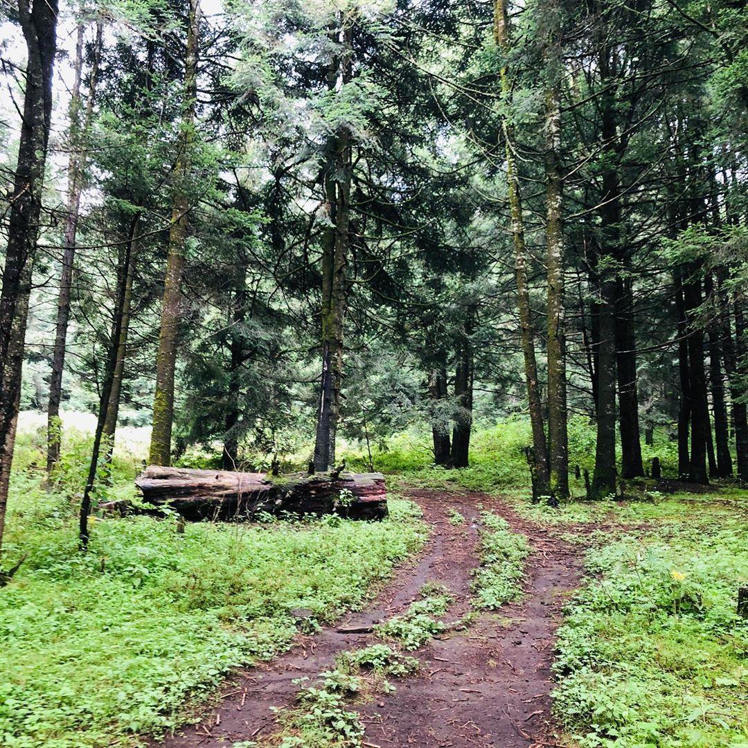 lugares cdmx conectar naturaleza