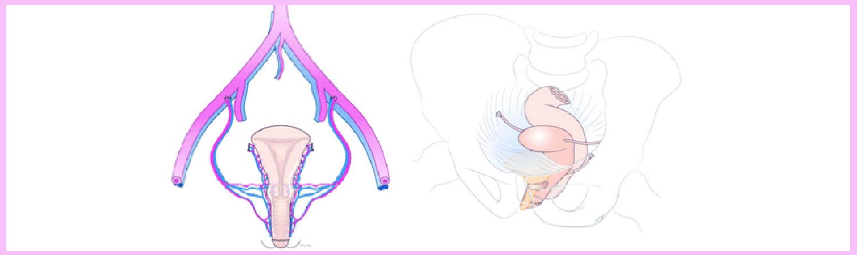 trasplante útero mujeres trans embarazo