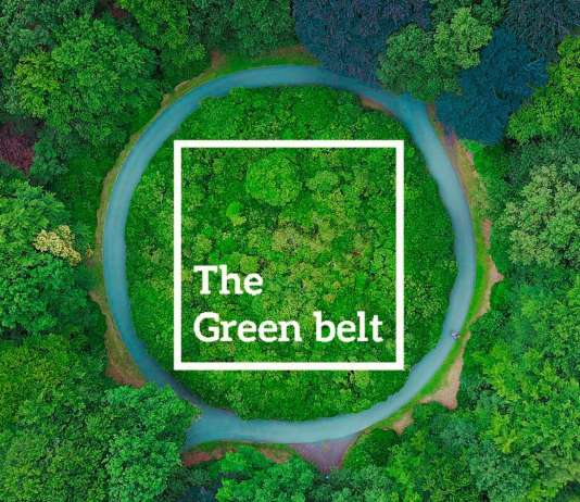 Citrus Green Belt Main – Homz N Space