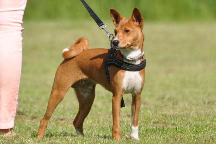 hypoallergenen hond  HondenForum
