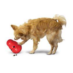 hond speelt met de kong wobbler