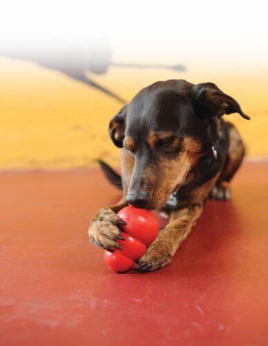 KONG Classic rood met hond