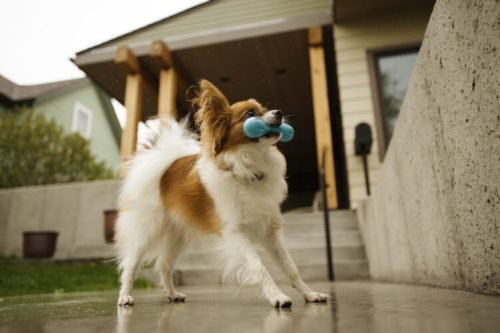Zogoflex hurley hond oranje