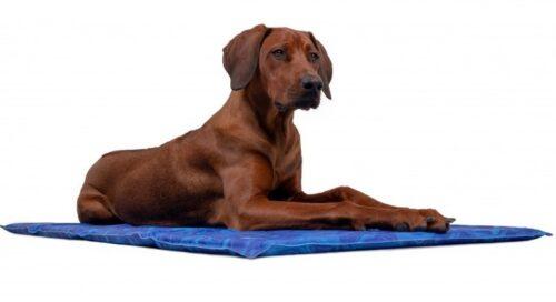 Hond op Trendpet arctic-comfort koelmat maat XL