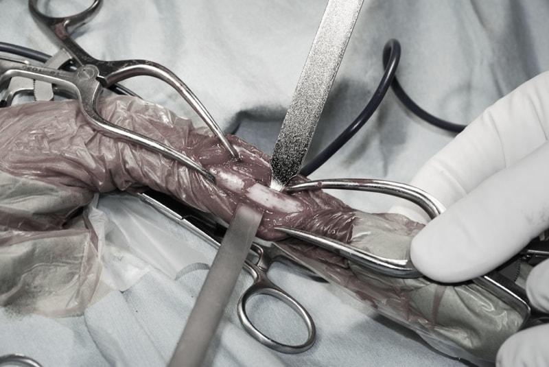 骨折整復-整形外科|ホンド動物病院|練馬區・中野區・杉並區・新宿區・板橋區