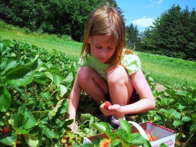Little Miss Strawberry picker