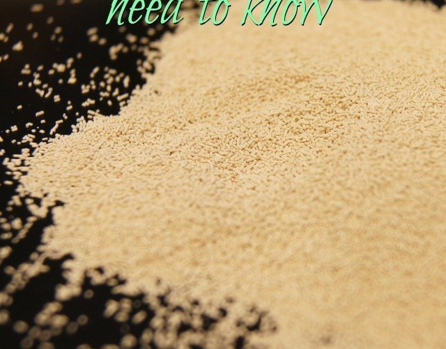 Afraid of yeast? You won't be after reading this!