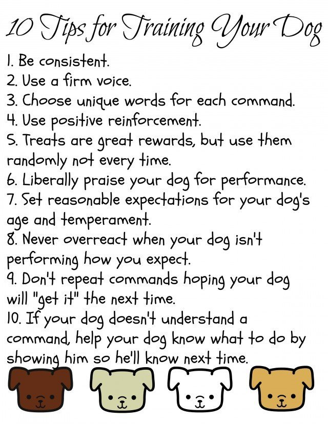 10 tips for training your dog