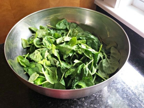 Spinach before wilting
