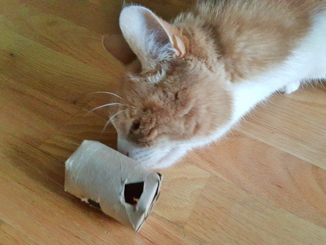 Playing with the DIY cat treat dispenser
