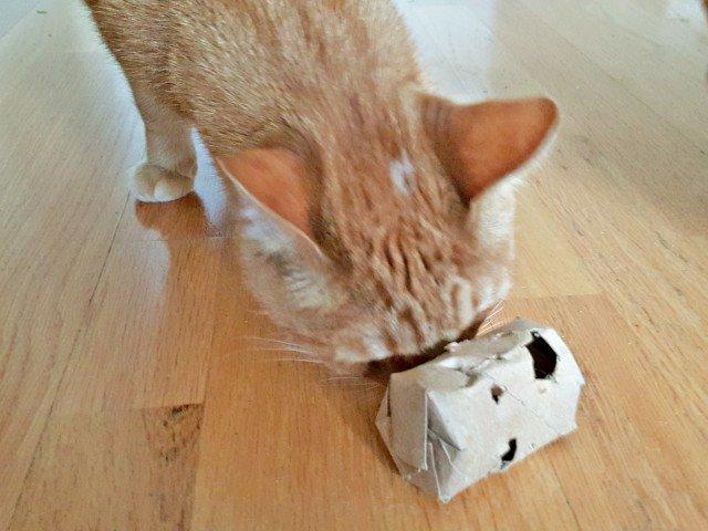 Roar loves his DIY cat treat dispenser too