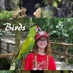 Pirates Birds and Monkeys is a once in a lifetime shore excurions to experience when you cruise into Isla Roatan Honduras. Fun for all ages, and not overly expensive, this review shares all you need to know.