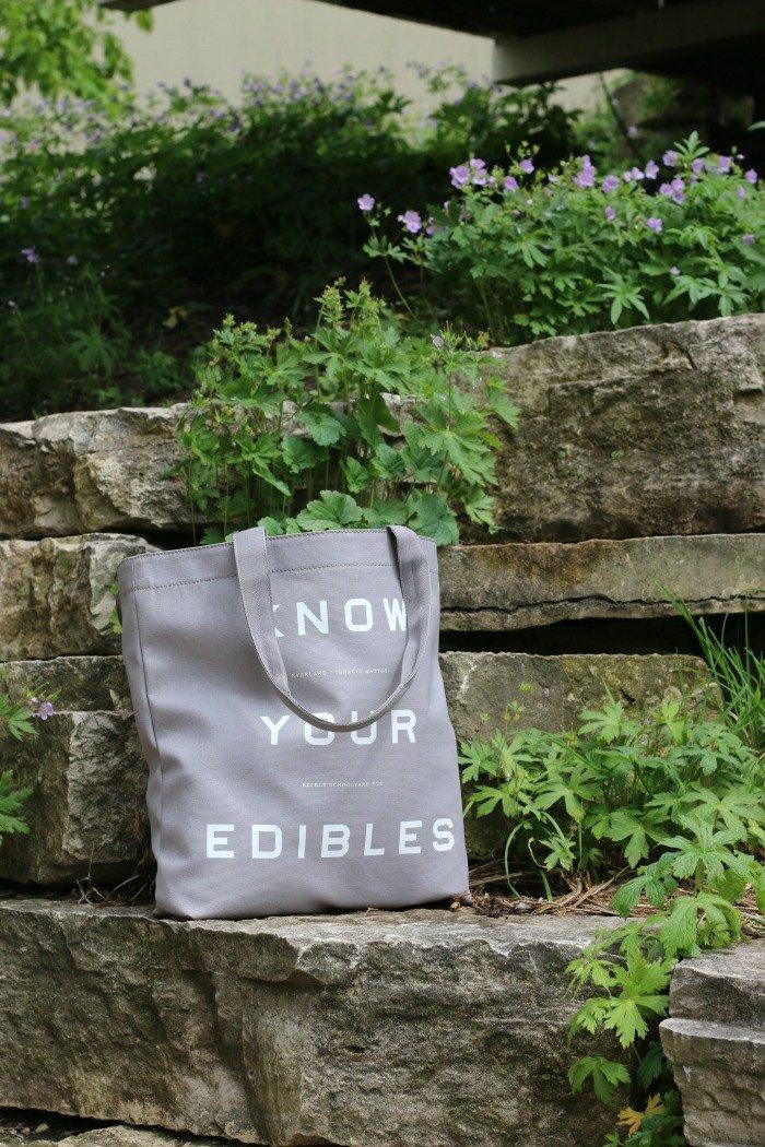 Everlane bag sitting on rocks