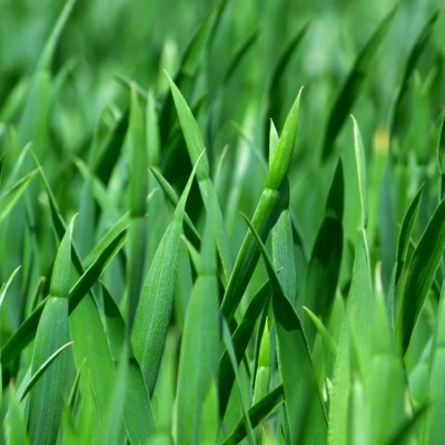 Why You Should Ditch Your Perfectly Manicured Lawn?