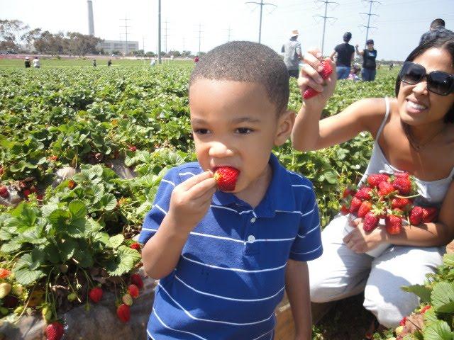 Kid eating stawberries at the Carlsbad San Diego farm