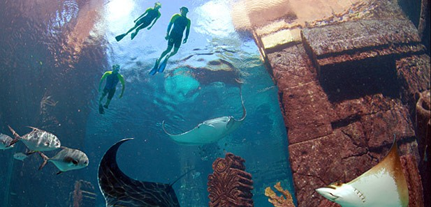 Marine life and water attractions scuba at Atlantis Resort, Bahamas