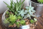 Indoor Succulent Garden, Willard and May