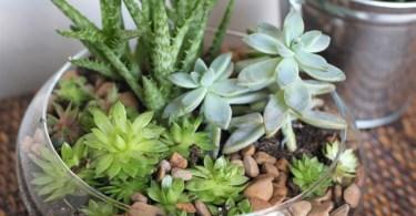 Indoor Succulent Garden, Willard and May
