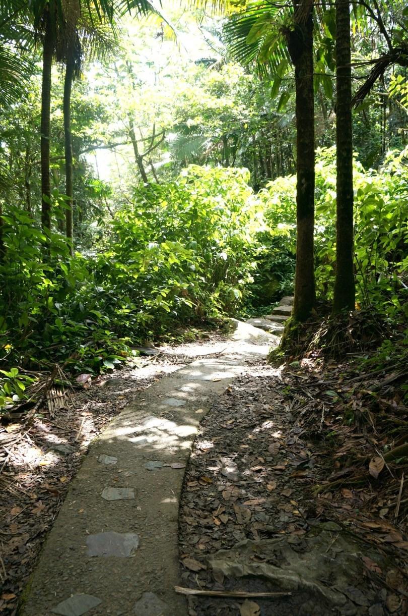 La Mina Falls trail, Puerto Rico rainforest