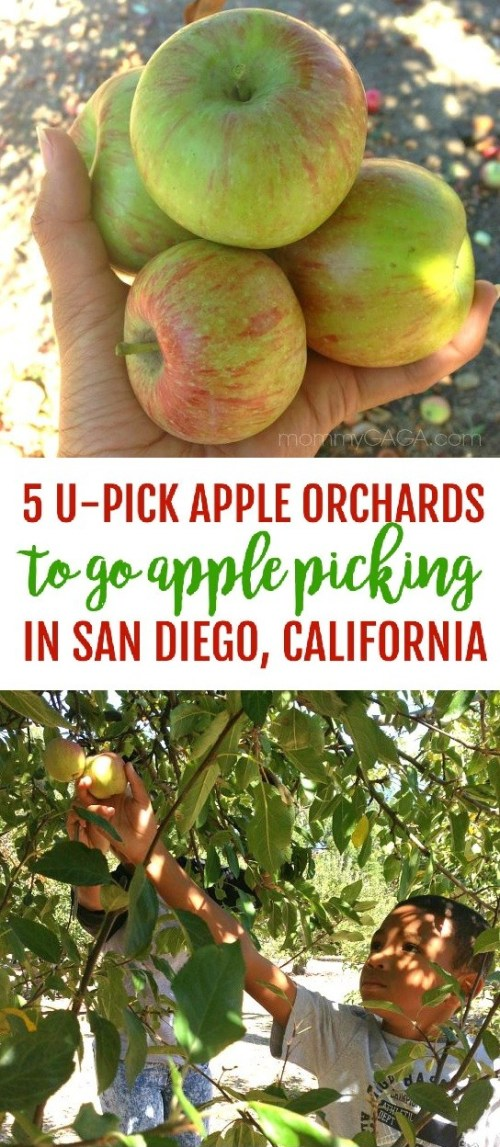 Go Apple Picking In San Diego - The top 5 Julian apple picking U-pick apple farms and orchards to take your family this fall