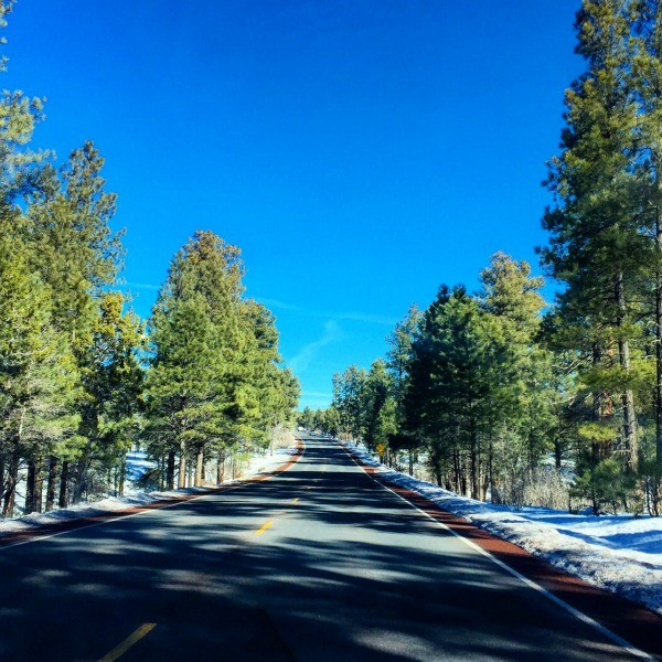 Grand Canyon Road Trip, tree lined Route 180