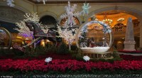 Top 5 Fun Holiday Activities to Celebrate Christmas In Las