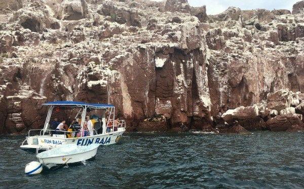 Snorkeling in La Paz, Mexico, Los Islotes sea lion colony