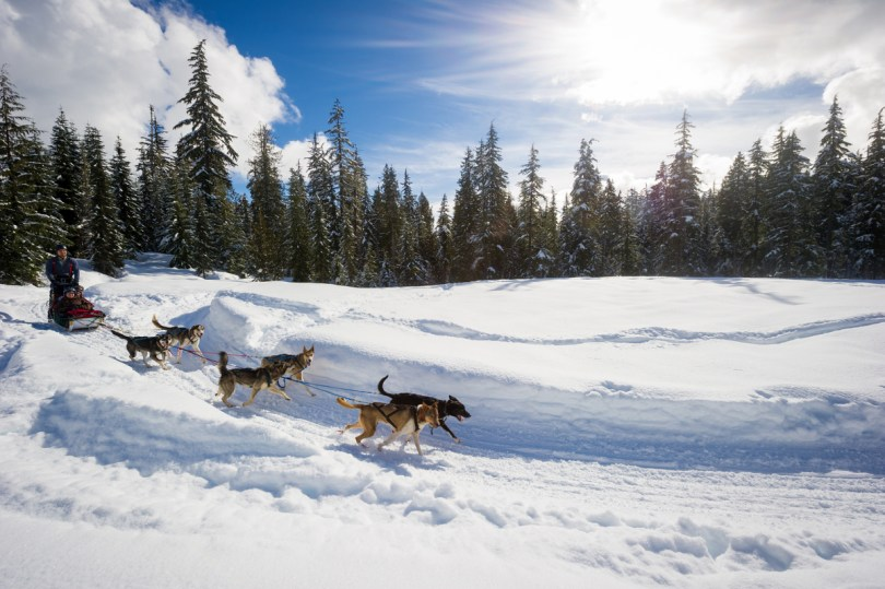 Dog sledding aprés ski in Whistler Canada