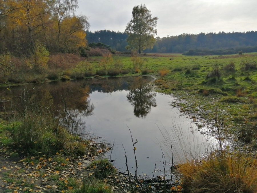Lost ponds