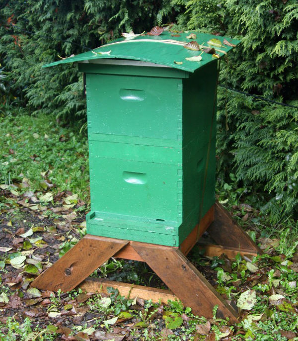 A tip for torrential rains: a hive shelter made from plywood and attached with a tie-down.