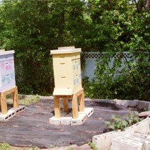 Hives decorated with help from a friend. Photo by Catherine Gulyas.
