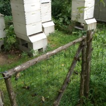 Willow Run hives produce B's Gold. Photo by Beverly Orthwein.